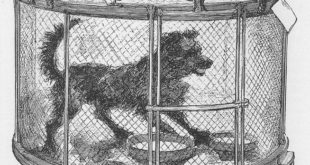 Dog Cage Used for Rabies Tests
