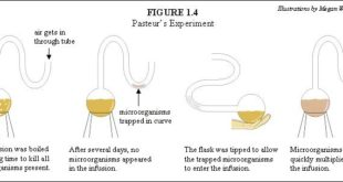 Louis Pasteur Swan Necked Experiment