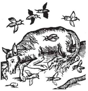 A 16th century depiction of spontaneous generation of honey bees from a dead ox.