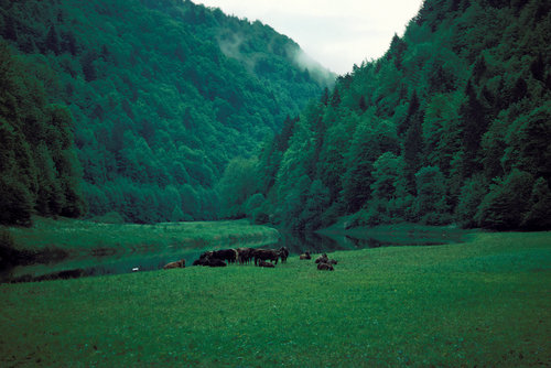 Valley in the Jura Mountains